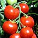 img_vegetable_1368787380439